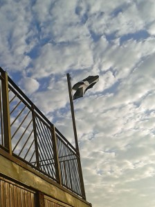 St Pirans Flag flying proud