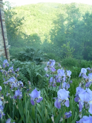 Iris and valleys