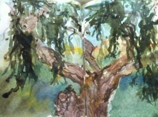 Watercolour of Cork Oak
