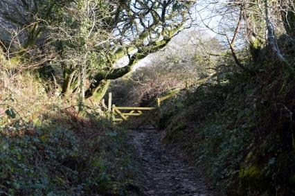 Ancient moorland lane
